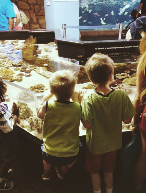 Touch Tank in the Georgia Explorer